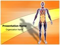 Organ System Editable PowerPoint Template