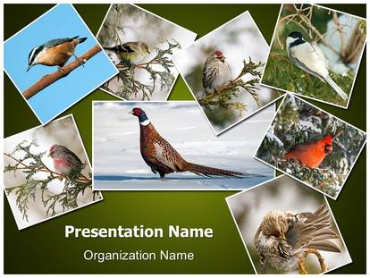 Free ornithology collage medical powerpoint template for medical free ornithology collage medical powerpoint template for medical powerpoint presentations toneelgroepblik Gallery