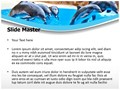 Dolphin Editable PowerPoint Template