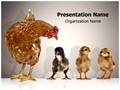 Hen with Chicks Editable PowerPoint Template