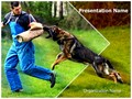 German Shepherd K9 Training Editable PowerPoint Template