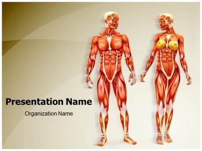 Men And Women Muscular Anatomy Editable PowerPoint Template