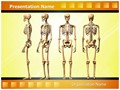 Human Skeleton Editable PowerPoint Template
