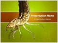 Water Larva Editable PowerPoint Template