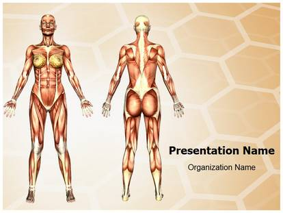 Free Women Muscular Anatomy Medical Powerpoint Template For
