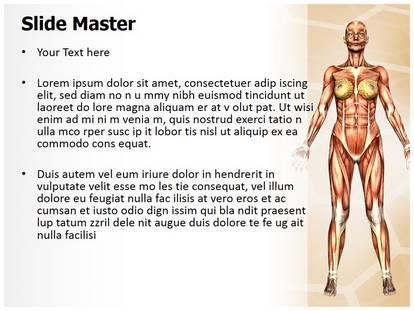 Free women muscular anatomy medical powerpoint template for women muscular anatomy powerpoint template toneelgroepblik Image collections