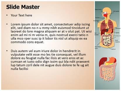 Free digestive system medical powerpoint template for medical free digestive system medical powerpoint template for medical powerpoint presentations toneelgroepblik Images