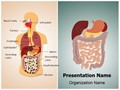 Digestive System Editable PowerPoint Template