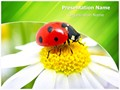 Ladybug Flower Editable PowerPoint Template