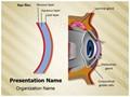 Cornea Tear Film Formation Editable PowerPoint Template