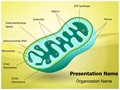 Eukaryotic Mitochondrion Organelle Editable PowerPoint Template