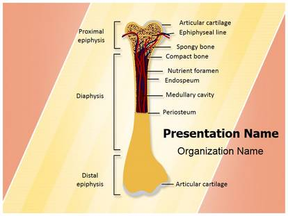 free bone structure medical powerpoint template for medical, Modern powerpoint