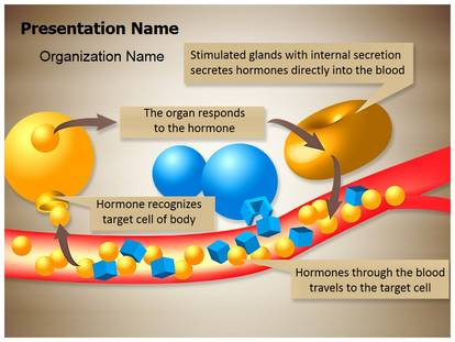 Free Hormone Glands Enzymes Medical Powerpoint Template For