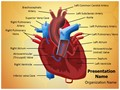 Heart Blood Circulation Editable PowerPoint Template