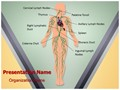 Lymphatic System Editable PowerPoint Template
