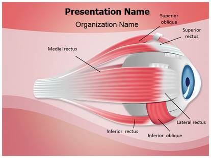 Free Ophthalmology Eye Muscles Medical PowerPoint Template