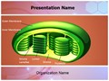 Photosynthesis Chloroplast Editable PowerPoint Template