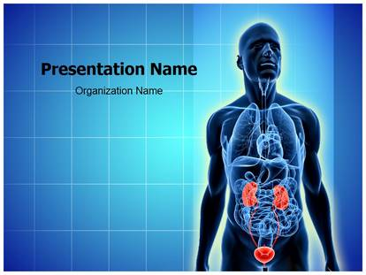 Free urinary system medical powerpoint template for medical urinary system powerpoint template toneelgroepblik Images