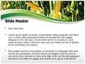 Corn Field Editable PowerPoint Template