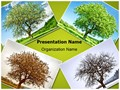 Seasonal Tree Editable PowerPoint Template