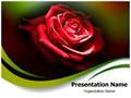 Red Rose In Dark Editable PowerPoint Template