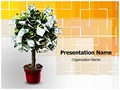 Plant With Dollars Editable PowerPoint Template