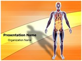 Organ System PowerPoint Templates