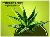 Aloe Vera Herbal Medicine Editable PowerPoint Template