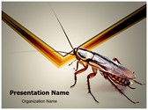 Cockroach PowerPoint Templates