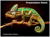 Chameleon Editable PowerPoint Template