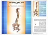 Human spinal Template
