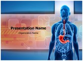 Human Stomach Editable PowerPoint Template