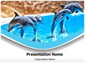 Dolphin Editable PowerPoint Template