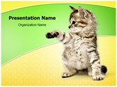 Kitten Editable PowerPoint Template