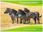 Equus Quagga Editable PowerPoint Template