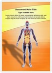 Organ System Word Templates