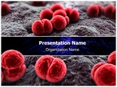 Meningococcus Editable PowerPoint Template