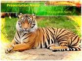 Bengal Tiger Editable PowerPoint Template