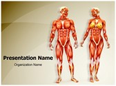 Men And Women Muscular Anatomy PowerPoint Templates