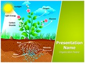 Plant Photosynthesis