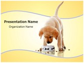 Dog Food Editable PowerPoint Template