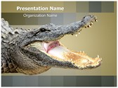 Alligator Editable PowerPoint Template