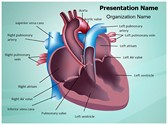 Cardiovascular Anatomy Ventricle PowerPoint Templates
