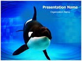 Orca Editable PowerPoint Template