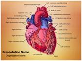 Cardiac Blood Vessels