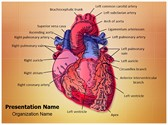 Cardiac Blood Vessels PowerPoint Templates