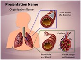 Human Lung Function