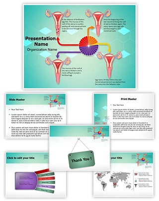 Gynecology Menstrual Cycle Editable PowerPoint Template