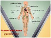 Lymphatic System Template