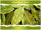 Bay Leaves PowerPoint Templates
